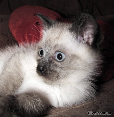 Отдам маленького котЭ! =)
