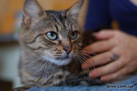 Кошка с невероятными глазами ищет дом