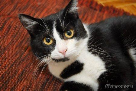 Кошека Бусинка, 7 мес., ищет дом