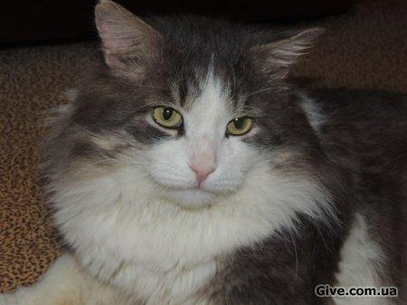 Роскошный кот ищет дом!