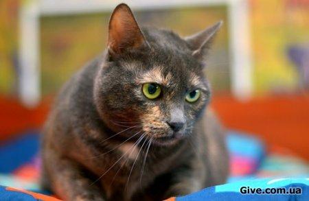 Главная кошка в Вашем доме! Только посмотрите на эту мордень и хитрые глазки!