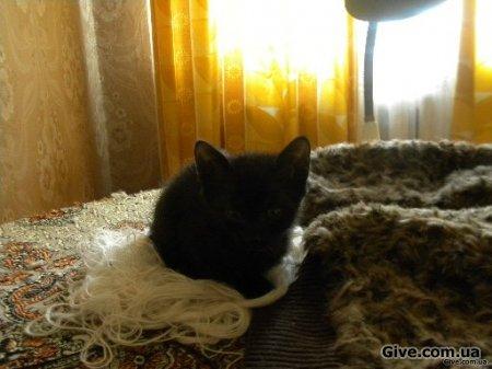 Чорні кошенята КИЇВ