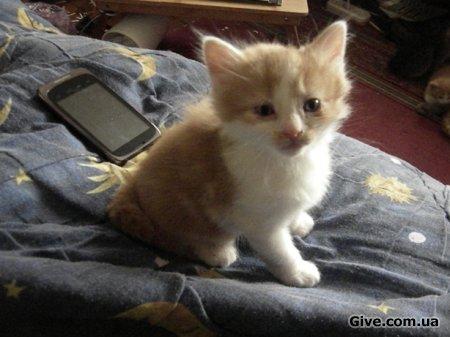 Кому рыжиков? Рыжие котята ищут добрых хозяев