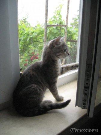 Котенок (девочка) 2.5 месяца