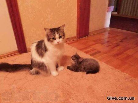Отдам двух котят