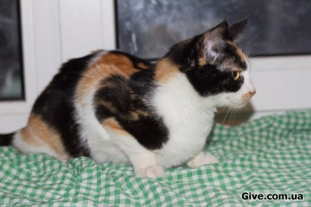 Красотка кошка 6 мес.
